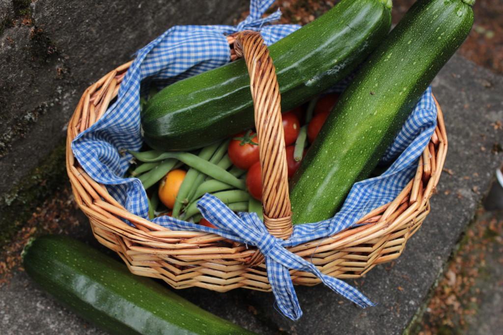 zucchini bönor tomat skörd