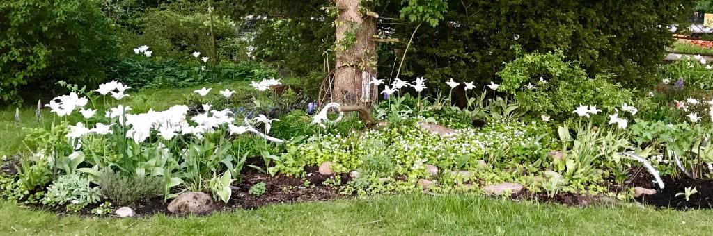 Vita rabatten med massor av smultron och myskmadra. (Trés chick heter liljetulpanen.)