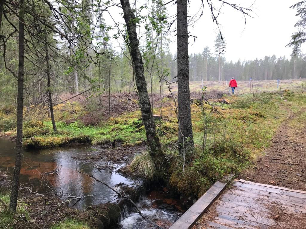 Skogen är skövlad - inte ens de gamla granarna vid bäcken sparades