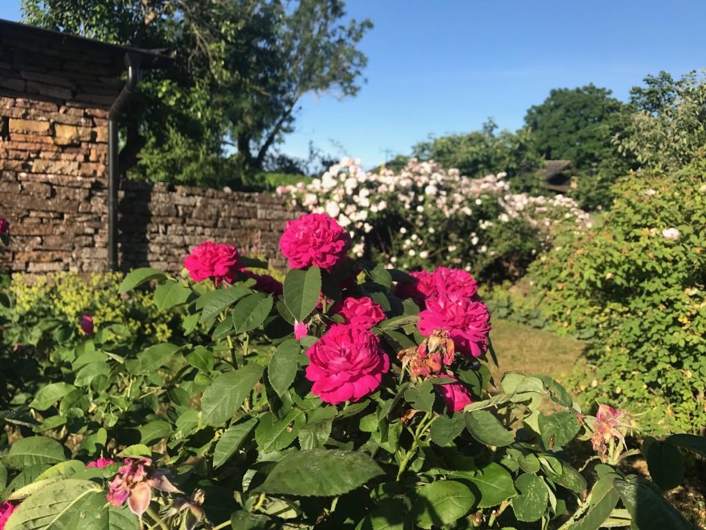 Rosengården i Vickleby, Capellagården