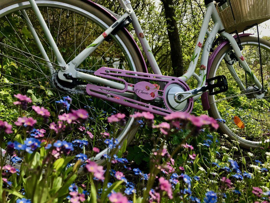 tulpancykel tulpaner cykel monarkkarin