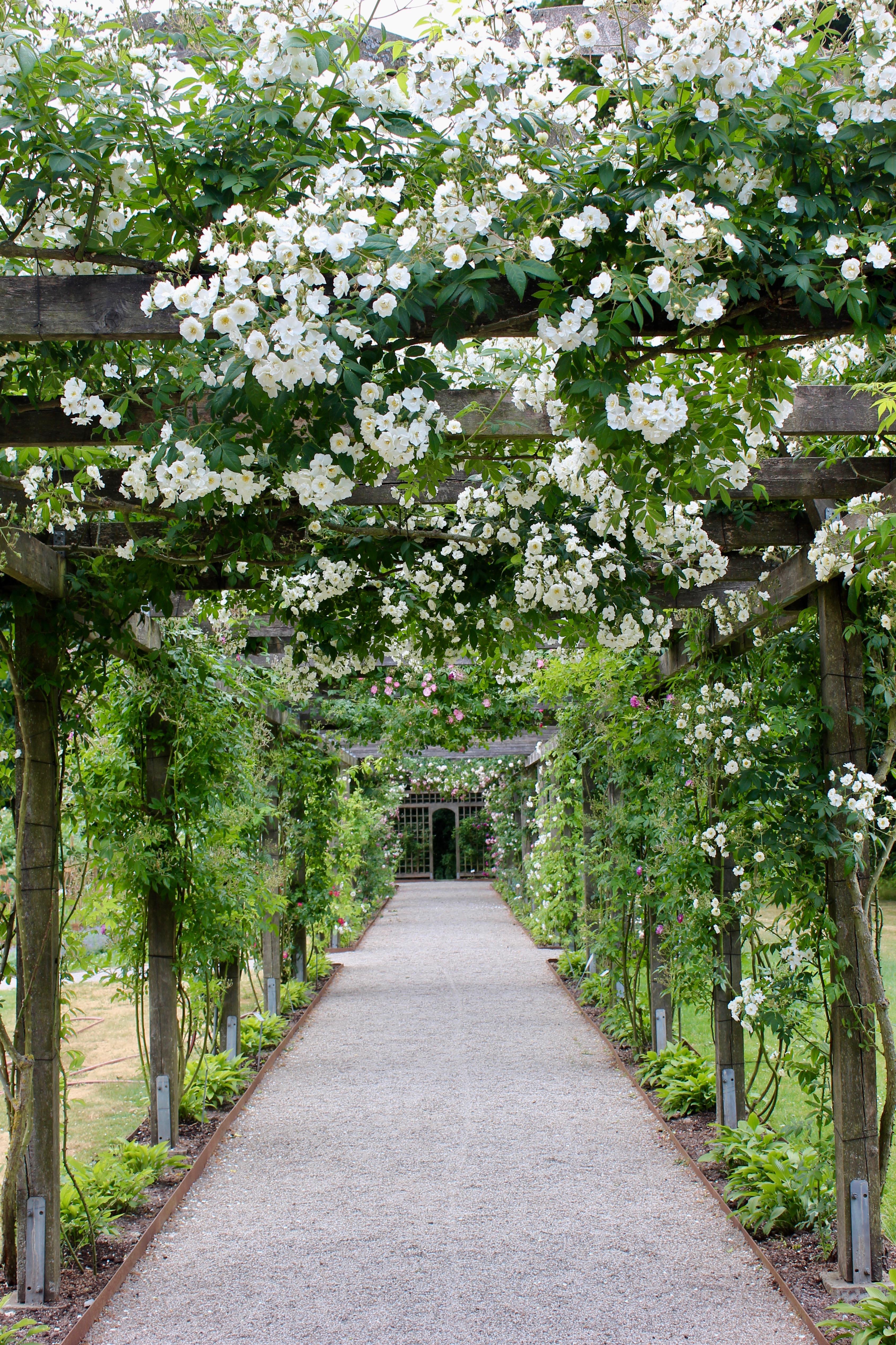 Fredriksdals trädgårdar Helsingborg rosor ros