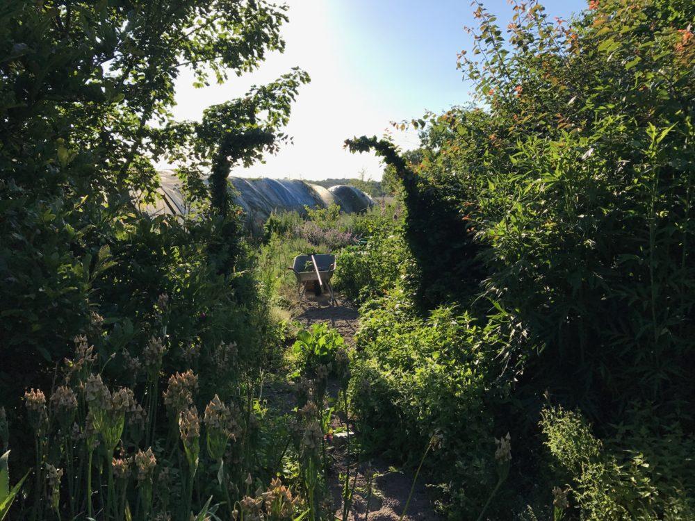 Trädgården portalen bag längan skottkärra