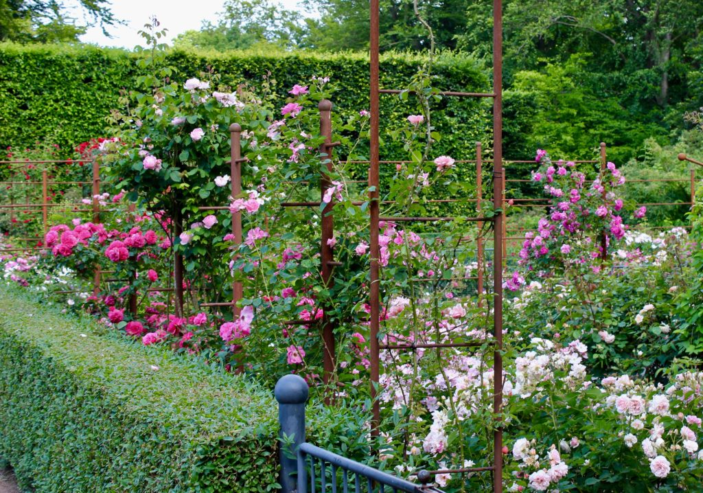 Fredriksdals trädgårdar Helsingborg ros rosa rosor pink roses rosegarden rosenträdgård
