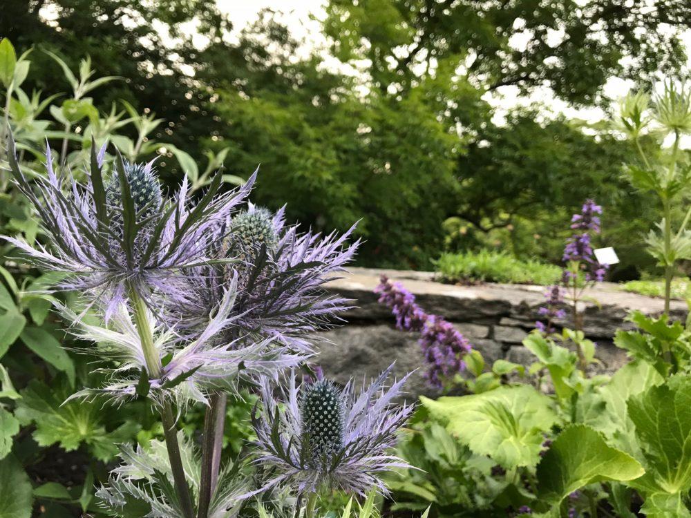 botaniska trädgården tistel göteborg