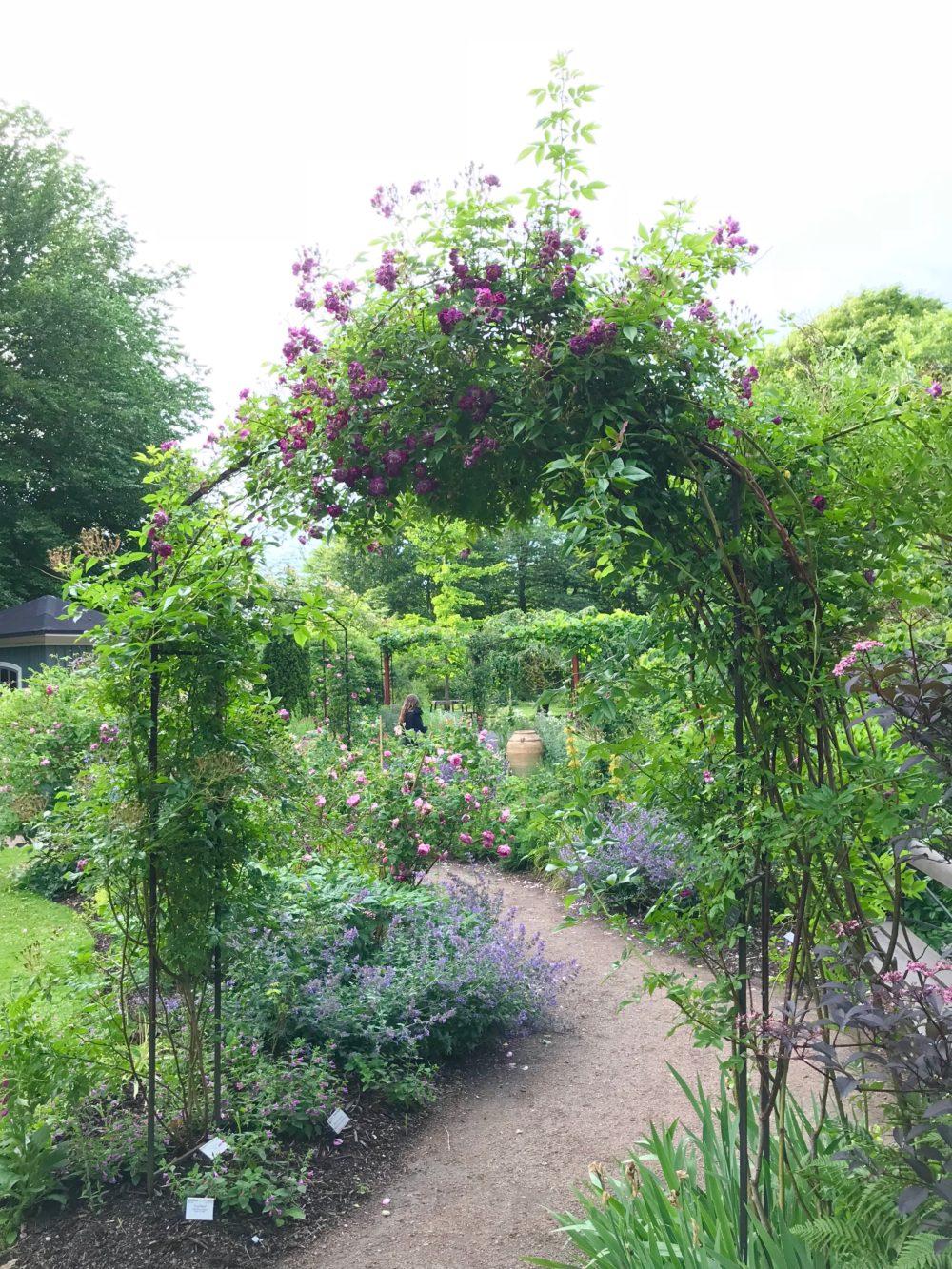 Botaniska trädgården i Göteborg