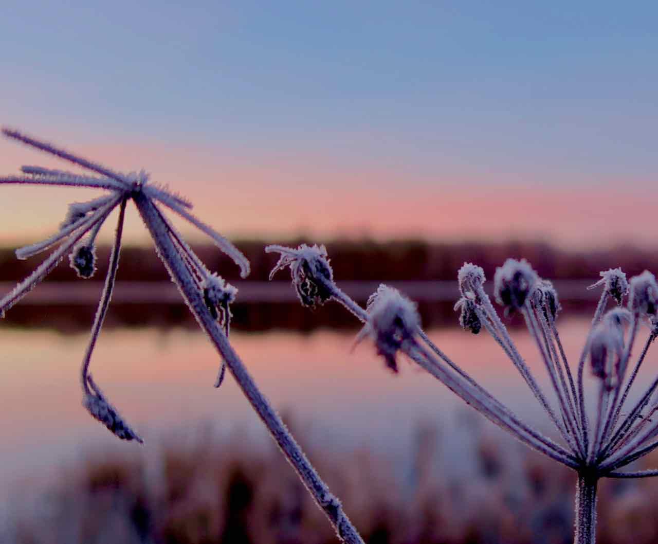 Älvdalen morgonpromenad frost