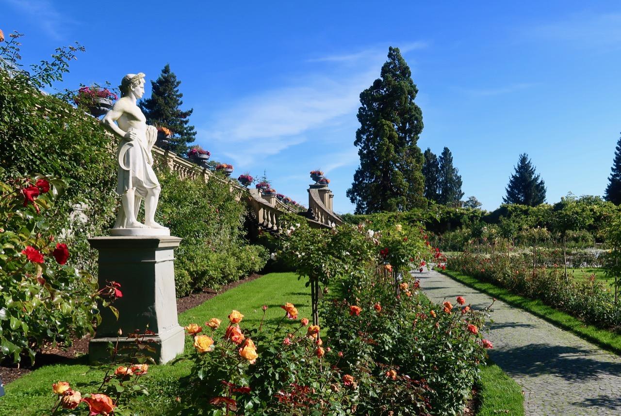 Rosenträdgården rosegarden